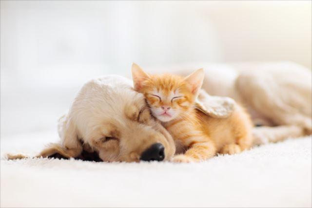 ペットも飼い主も幸せに生活するためのペットの選び方